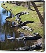 Alligators Beach Canvas Print