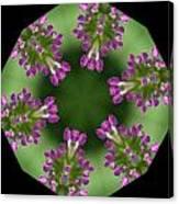 Allium 2 Canvas Print