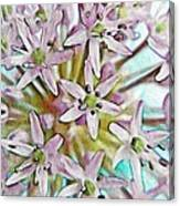 Allium Globe Canvas Print
