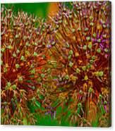 Allium Seeds Canvas Print