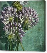 Allium Wildflower With Grunge Textures Canvas Print