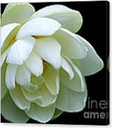 Alluring Lotus Canvas Print