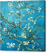 Almond Blossom Branches Print Canvas Print