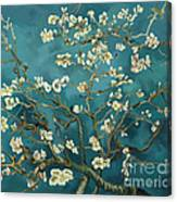 Almond Blossoms' Reproduction Canvas Print