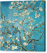 Almond Branches In Bloom Canvas Print