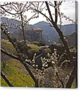 Almond Tree And Monastery   #9815 Canvas Print