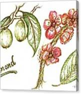 Almond With Flowers Canvas Print