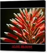 Aloe Bloom Window Canvas Print