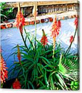 Aloe In Bloom Canvas Print