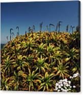 Aloe Is Anyone There Canvas Print