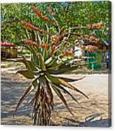 Aloe Plant In Kruger National Park-south Africa Canvas Print