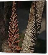 Aloe Stalk Canvas Print