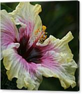 Aloha Aloalo Tropical Hibiscus Haiku Maui Hawaii Canvas Print