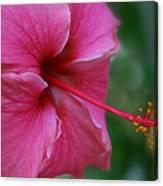 Aloha Aloalo Ulu Wehi Pink Tropical Hibiscus Wilipohaku Hawaii Canvas Print