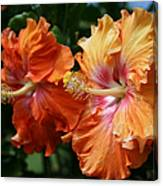 Aloha Keanae Tropical Hibiscus Canvas Print