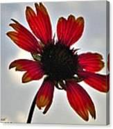 Alone Flower I Mlo Canvas Print