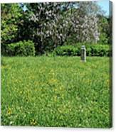 Alone In A Field Of Buttercups Canvas Print