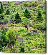 Alone In Grizzly Country Canvas Print