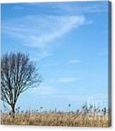 Alone Tree In The Reeds Canvas Print
