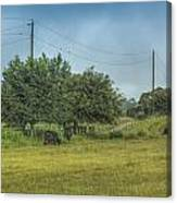 Along A Rural Road Canvas Print