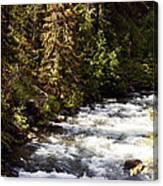 Along American River Canvas Print