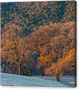 Along Miwok Trail In Winter Canvas Print