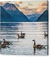 Alouette Lake Geese Canvas Print