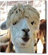 Alpaca Hair Do Canvas Print
