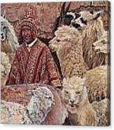 Alpaca shepherd Canvas Print