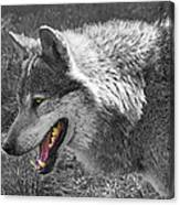 Alpha Male Wolf - You Look Tasty 2 Canvas Print