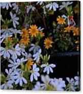 Alpine Beauties Canvas Print