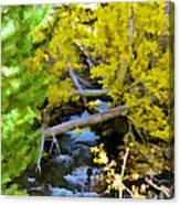 Alpine Creek  Canvas Print