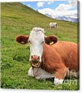 Alpine Pasture With Cow Canvas Print