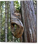 Altered Tree Trunk Growth Canvas Print