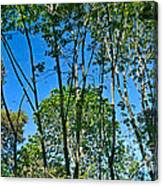 Alternate Reality - Reflected View Of The Forest From A Pond In Garland Ranch Park In Carmel Valley. Canvas Print