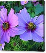 Always Loved Cosmos Canvas Print