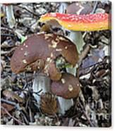 Amanita Muscaria And Edible Boletus Canvas Print