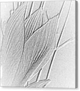 Amaryllis-8 Canvas Print