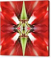 Amaryllis Flower Canvas Print