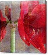 Amaryllis In The Rough Canvas Print