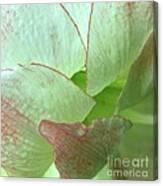Amaryllis Petals Canvas Print