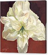Amaryllis With Red Canvas Print