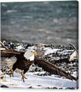 Amazing Bald Eagle  Canvas Print