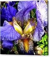 Amazing Iris Canvas Print