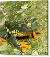 Amazon Leaf Frog Canvas Print