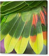 Amazon Parrots Feathers Abstract Canvas Print