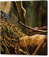 Amazon Tree Boa Canvas Print