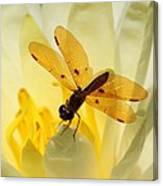 Amber Dragonfly Dancer Canvas Print