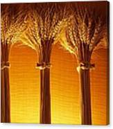 Amber Grains Canvas Print