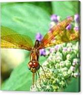 Amber-wing Dragonfly 2 Canvas Print